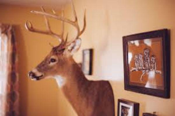 廊下に飾り棚をつけてお気に入りを飾れば一瞬ですてきな空間に!