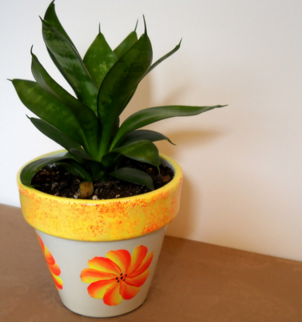 育てやすい観葉植物でリビングを癒しの空間に!