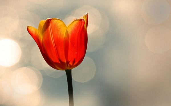1年中咲き乱れるチューリップ!?富山の「チューリップ四季彩館」が素敵すぎる!